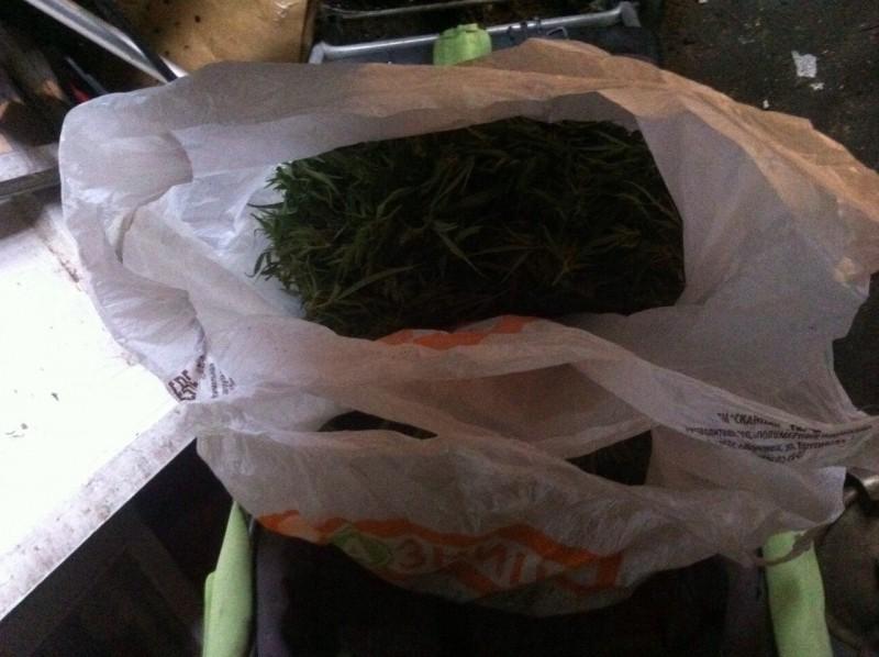 Ст 228 сбыт марихуаны семена марихуаны как выращивать