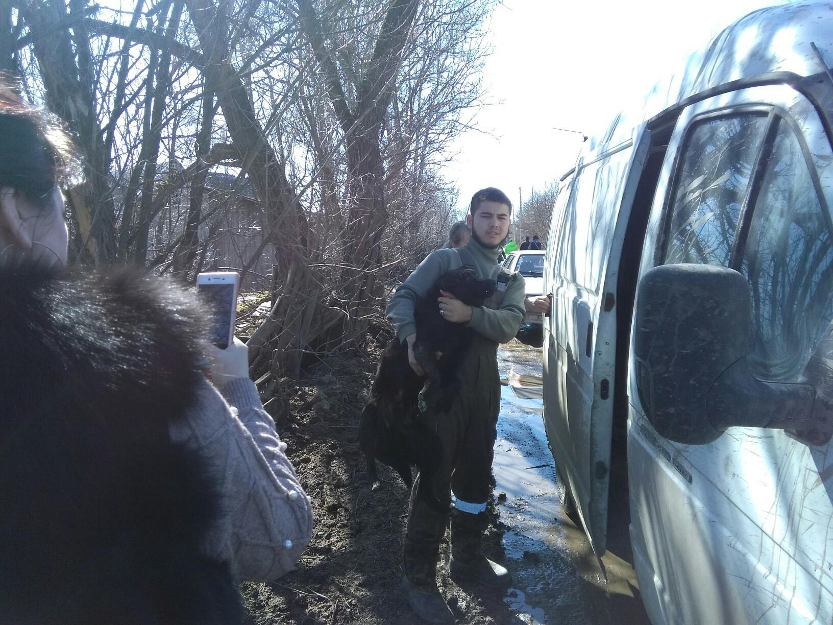Администрация Кимр заключила контракт на отлов собак со скандально известным ИП Шариповым