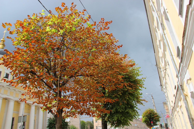 Картинки тверь осень