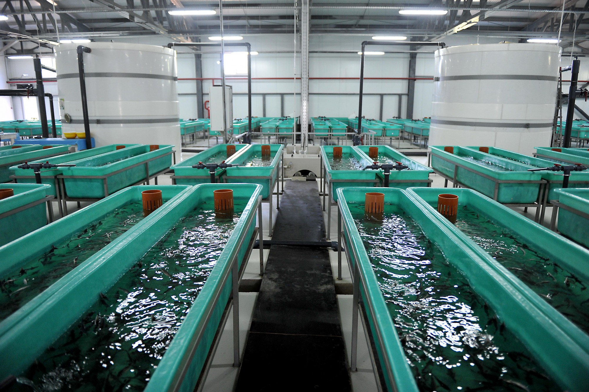 Производство выращивания рыбы 24