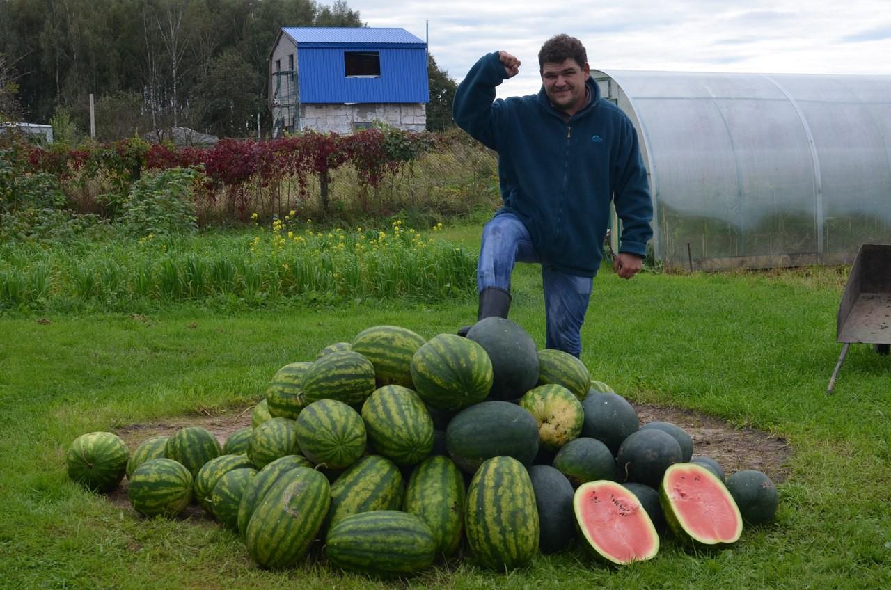 Выращивание арбуза и дыни в подмосковье 69