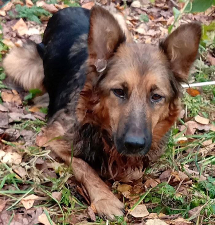 В Кимрах неизвестные привязали собаку к дереву и издевались над ней