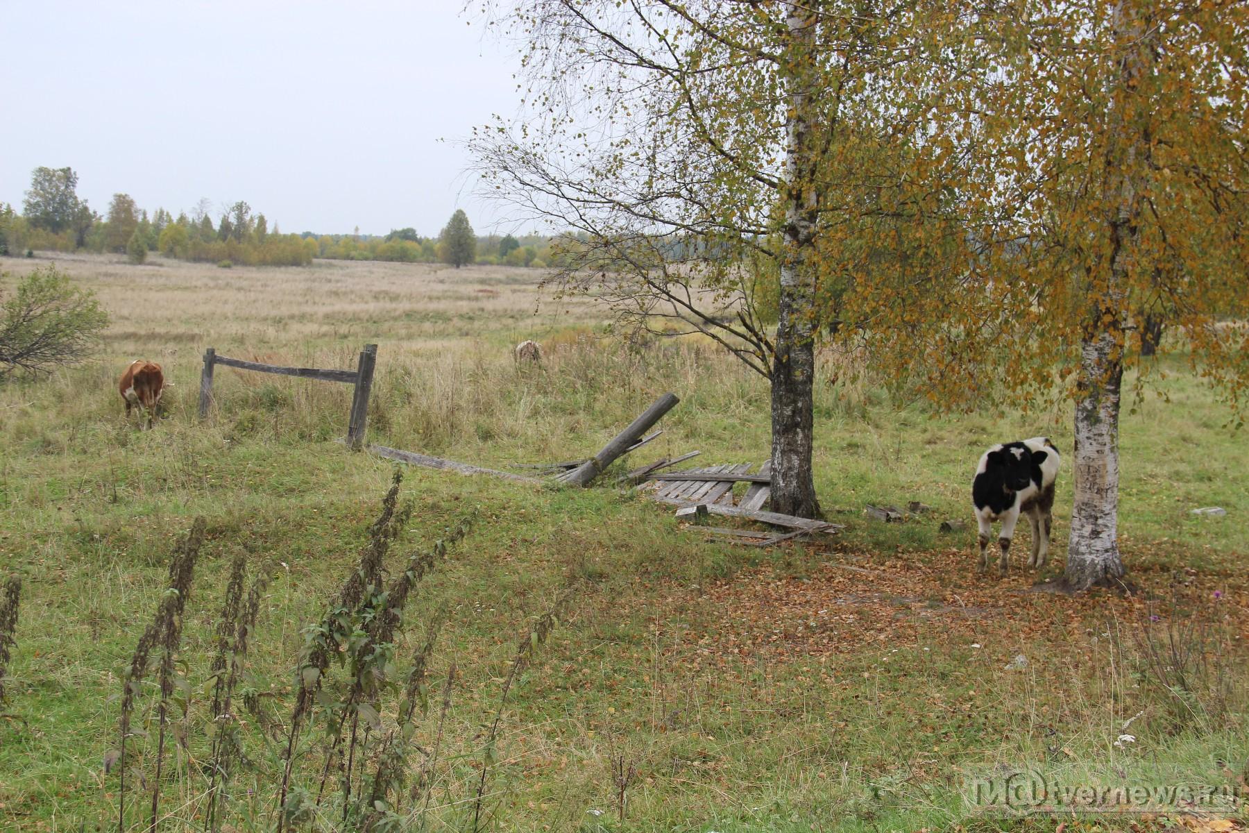 волки в деревне фото сентябре спортсменов центра
