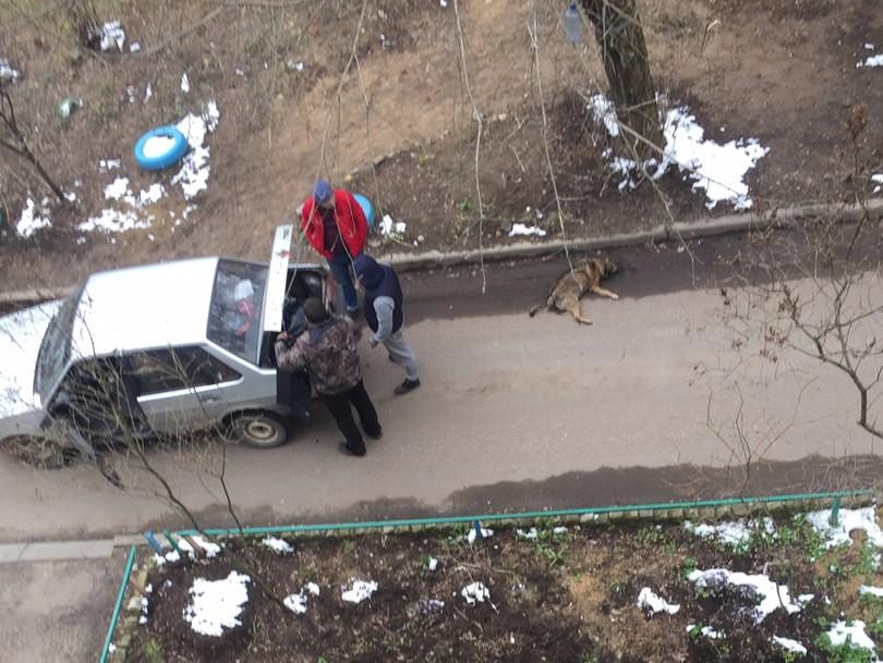 Гуманный отлов в Твери. Домашняя собака, убитая на глазах у ребёнка