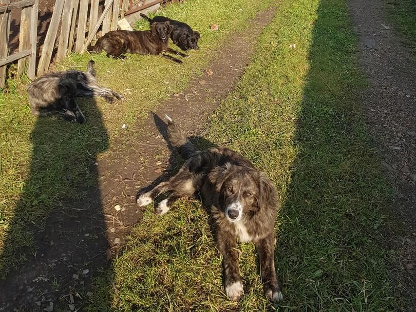 В Кимрах ловцы за 22 000 рублей отловили четырёх собак, но «потеряли» их по пути