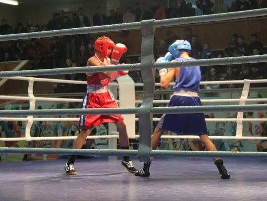 Тульские боксеры выиграли три золотых медали напервенстве ЦФО