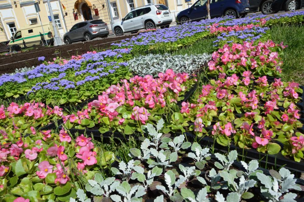 Впервом летнем месяце вТвери появятся вертикальные конструкции сцветами